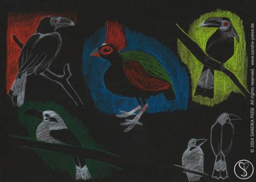 birds_zoo_sp