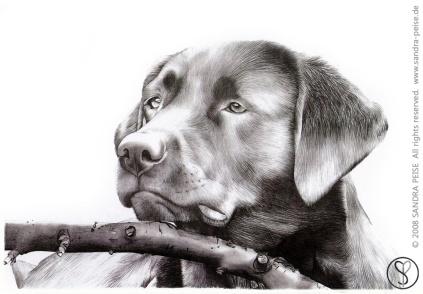 Dog_sp