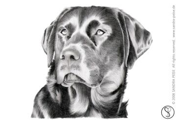 Hund_01_sp