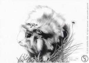Meerschwein_01_dunkel_sp