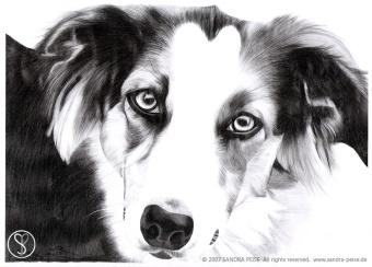 Nicoles Hund_sp